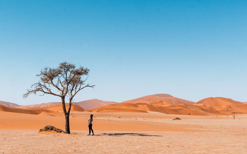 Namibia-desert-Common-Wanderer