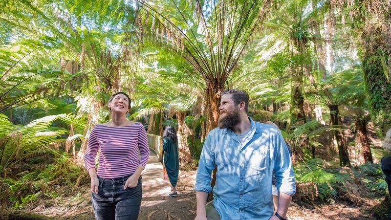 Travellers walking through a rainforest in Australia