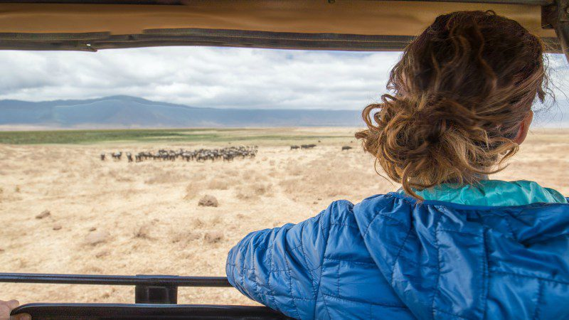 Watching wildebeest in Ngorongoro Crater