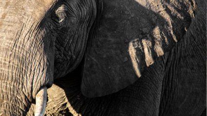 Africa through the lens with photographer Ben McRae