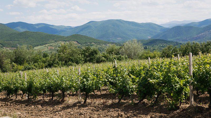 Macedonia food vineyards Intrepid Travel