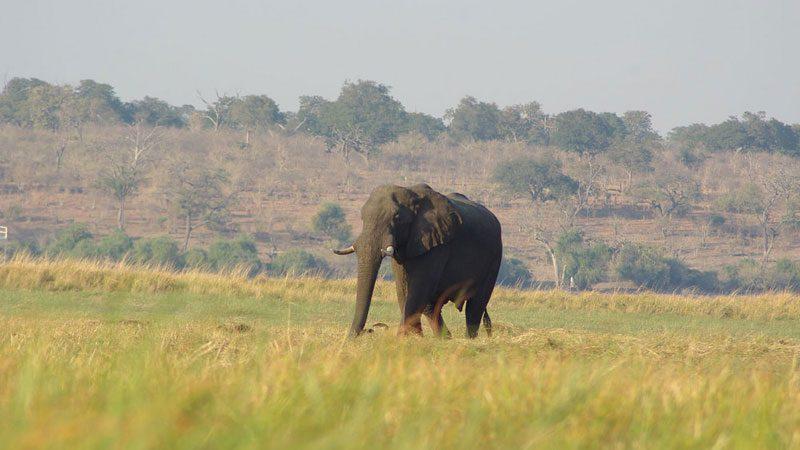 Namibia Caprivi Strip elephant - Becky Flickr