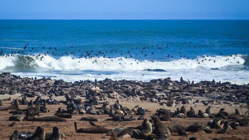 Namibia Cape Cross seal colony - jbdodane