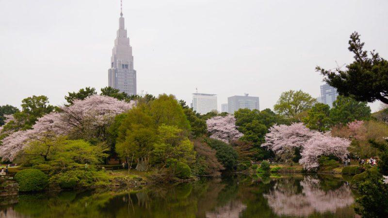 Shinjuku Gyoen Tokyo