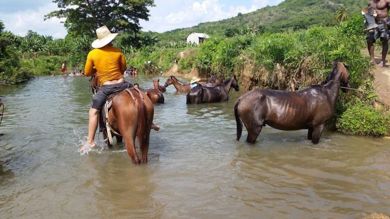 Cuba Trinidad horses