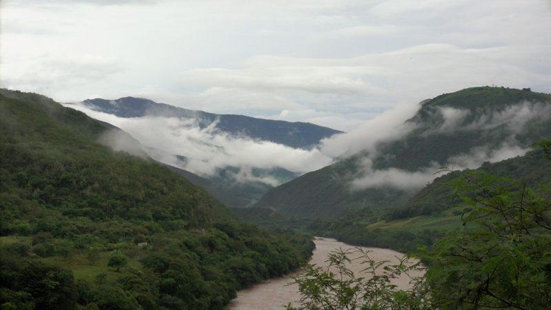 Jungle Peru
