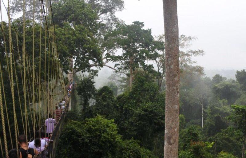 Ghana rainforest