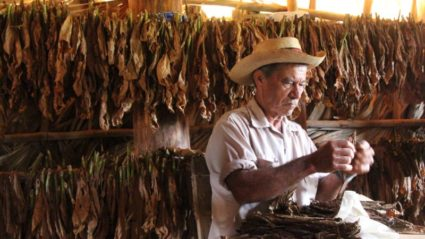 What a tobacco farmer taught me about the art of Cuban cigar making
