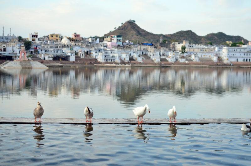 Pushkar Lake Rajasthan India