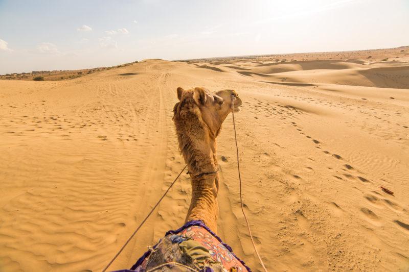Camel Thar desert, Rajasthan, India