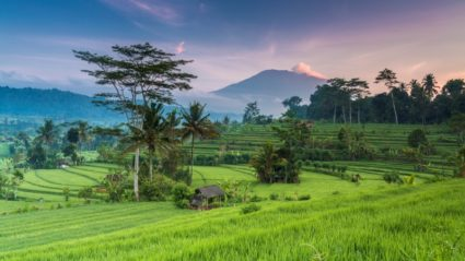 Obama does Bali: How to travel there like the former President