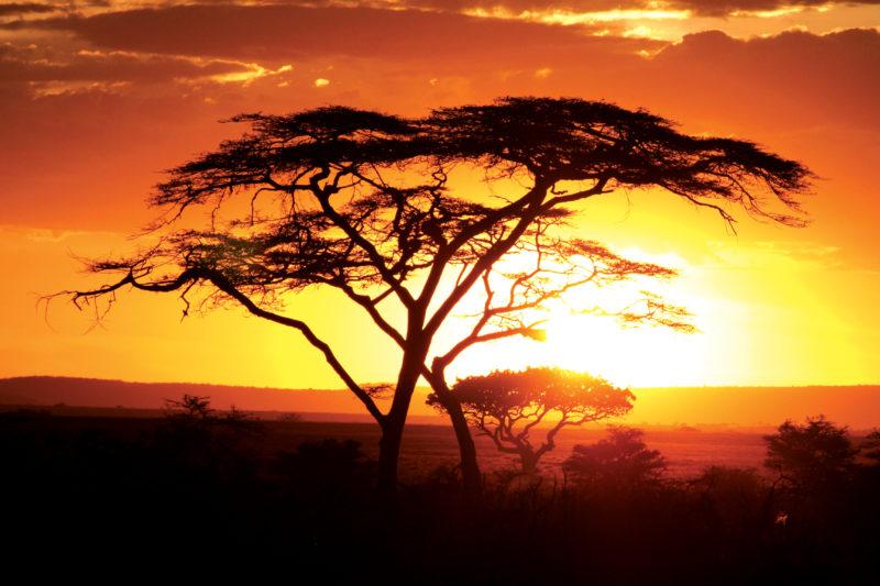 serengeti Kenya safari