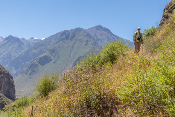 Trekking Colca Canyon Peru