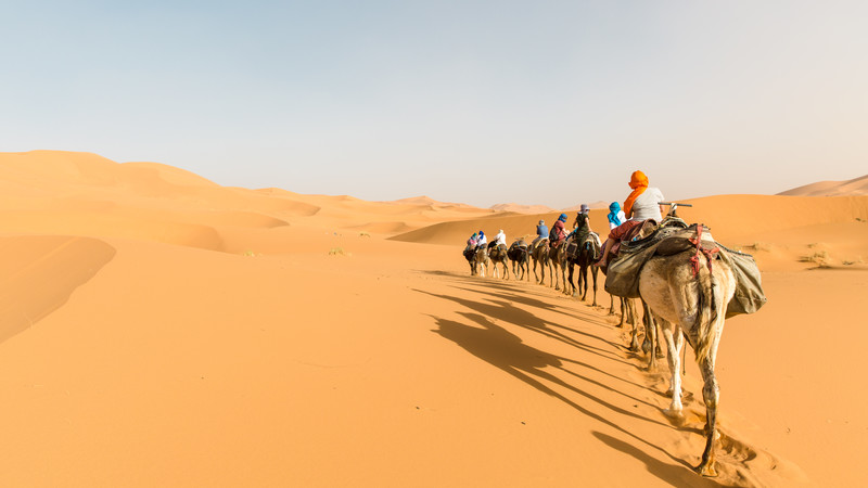 Camel safari in the Sahara