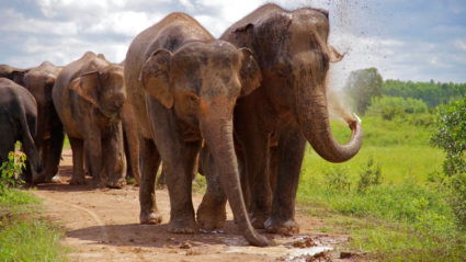 How you can engage in ethical elephant tourism: World Animal Protection lays it out