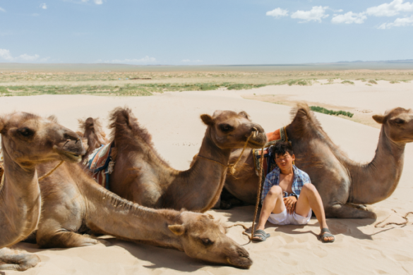 A Gobi Desert guide with his camels