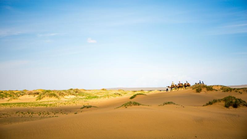 Camel trekking across the dunes of the Gob Desert