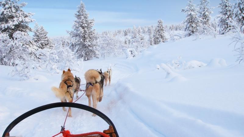 Yllästunturi Finland Finnish Lapland dog-sledding
