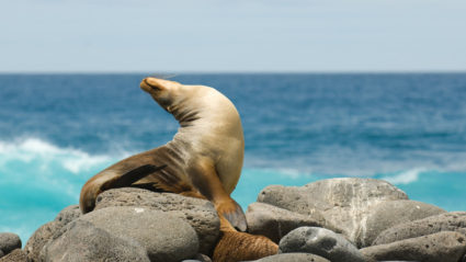 The essential Galapagos Islands packing guide
