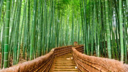 The top 10 places you should visit in Japan