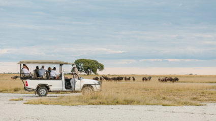 Botswana in photos: the magic of an Intrepid safari
