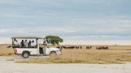 Botswana in photos: the magic of an Intrepid safari