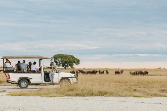 Safari in Botswana Nata