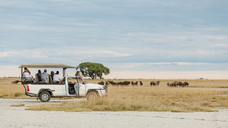 Safari in Botswana Nata