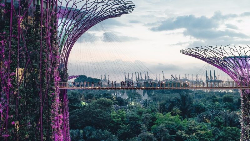 Supertrees at Singapores Gardens by the Bay.