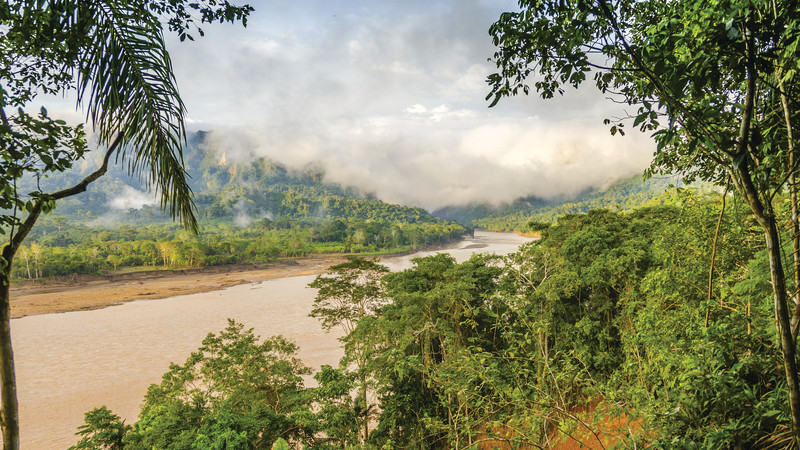 Bolivia jungle