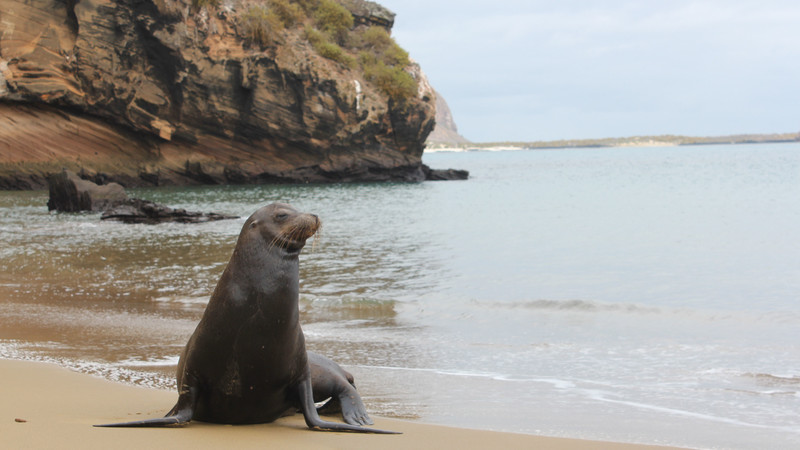 A sea lion sits on a beach in the Galapagos Islands