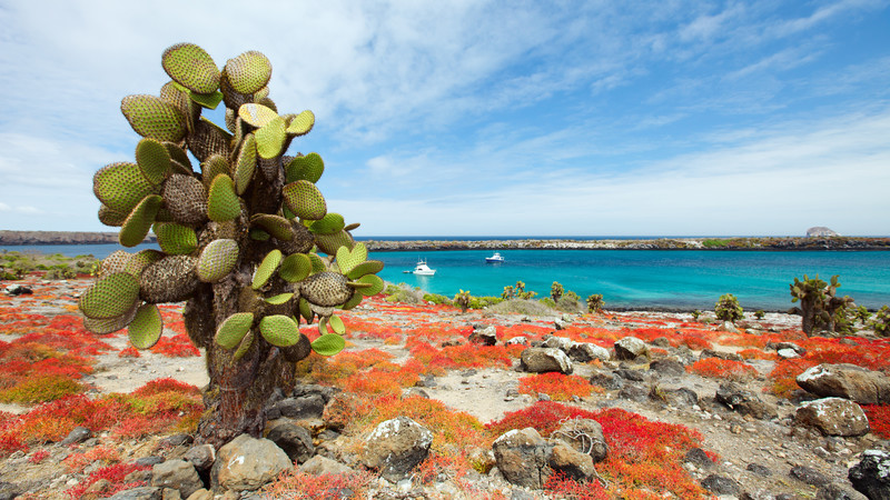 A cactus grows out of red rocks in the Galapagos