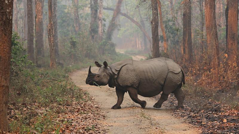 Nepal rhino Chitwan National Park
