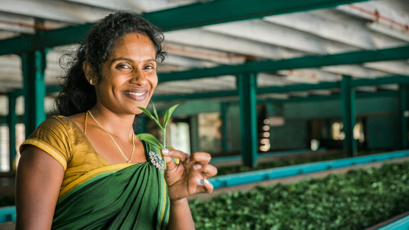 sri-lanka_nuwara-eliya_tea-factory_local_tea-leaf