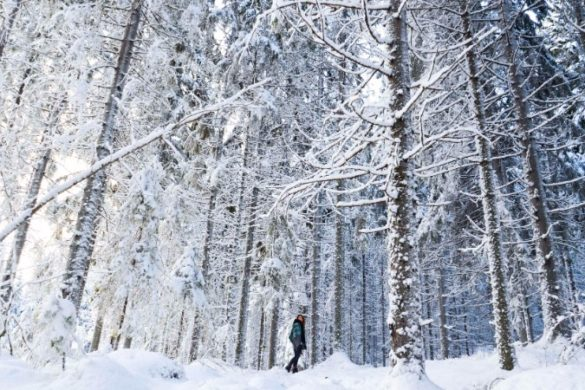 A woman walks in a snow-covered forest in Finnish Lapland