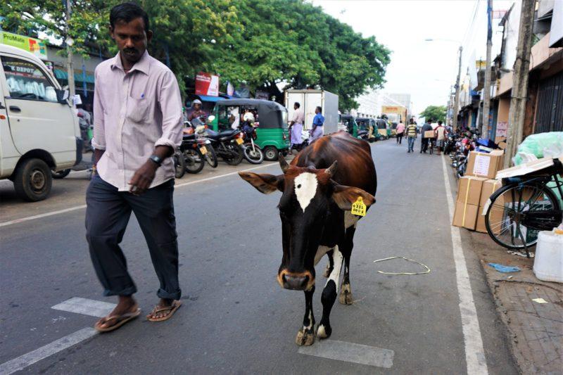 Jaffna market Northern Sri Lanka