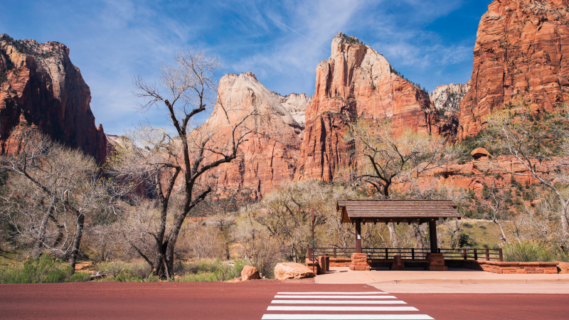 The red cliffs of Zion National Park