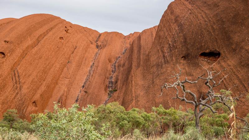 Looking up at Uluru through the scrub