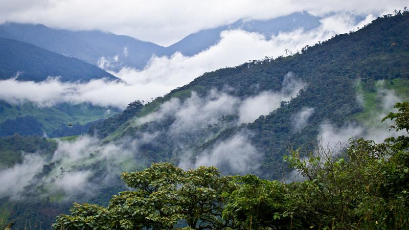Amazon jungle Ecuador