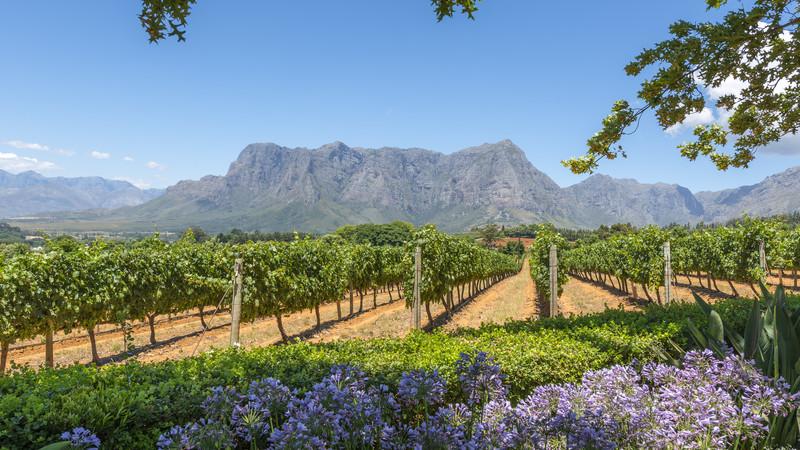 South Africa vineyards wine