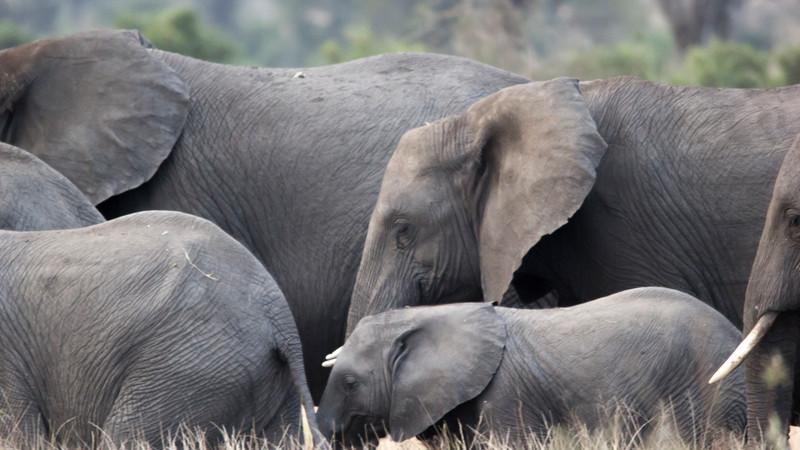 Elephants safari South Africa