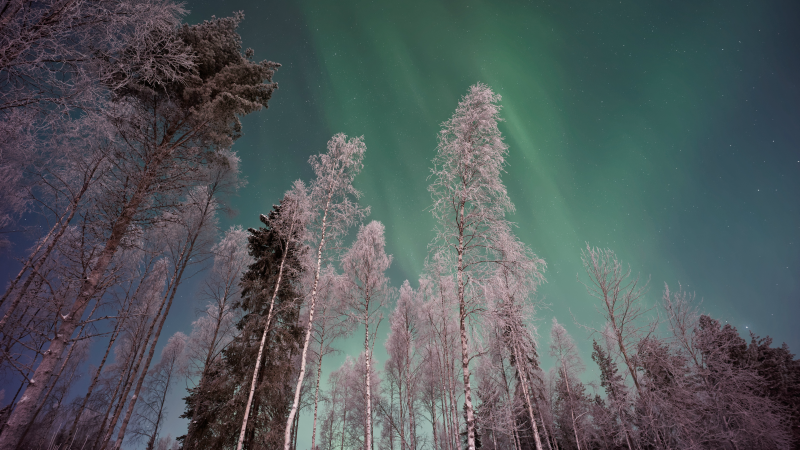Northern Lights over Finnish Lapland