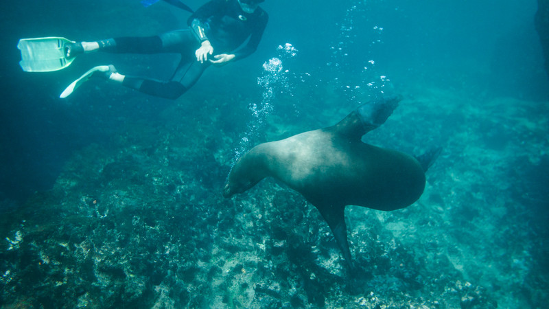 alternative winter breaks Galapagos