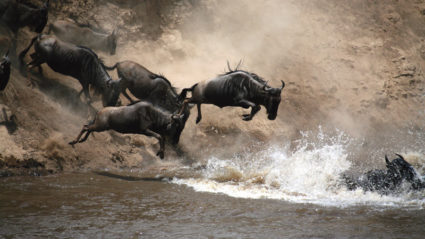 East Africa's Wildebeest Migration: Everything you need to know