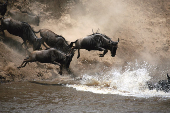 Wildebeest migration guide Kenya