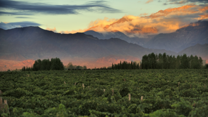 The wining and dining guide to Mendoza