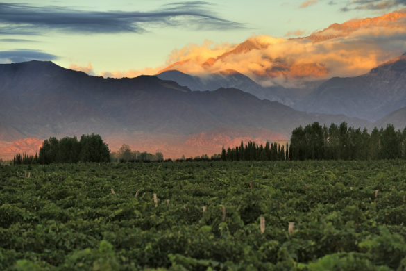 Views over the vineyards in Mendoza