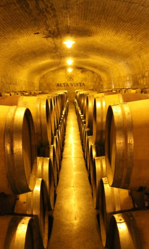 Wine cellar in Mendoza