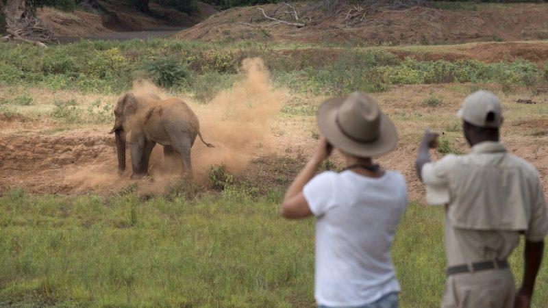 An elephant enjoys a dustbath in Kruger National Park