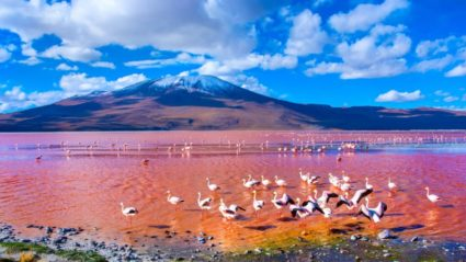Is this Bolivia's most incredible natural wonder? Your guide to Laguna Colorada